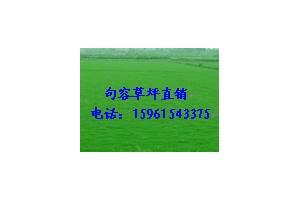 百慕大与黑麦草混播草坪低价四季青草坪电15961543375