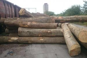 欧洲塞尔维亚白蜡木原木图片