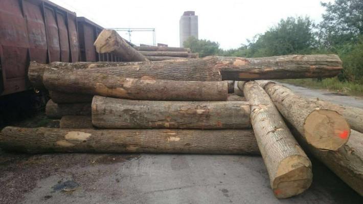欧洲塞尔维亚白蜡木原木商品报价