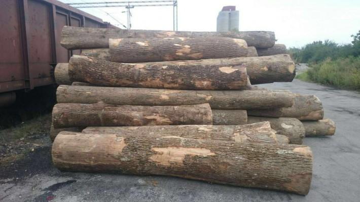 欧洲塞尔维亚白蜡木主要用于欧式家具