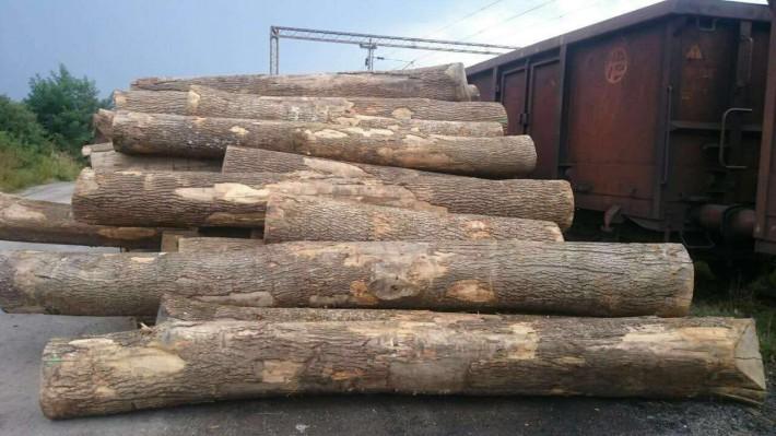欧洲塞尔维亚白蜡木原木的优点