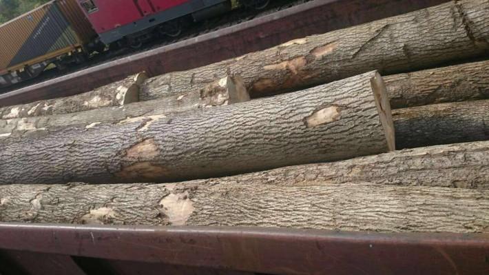 欧洲塞尔维亚白蜡木原木的缺点