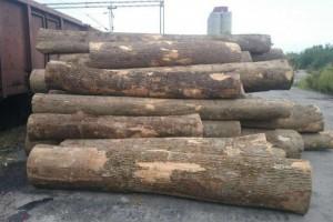 欧洲塞尔维亚白蜡木原木最新批发价格