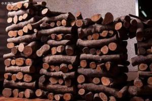 何为樱桃木,何为黑胡桃,何为榉木,木头性能大解密