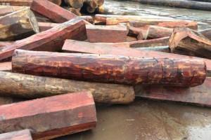 常见的木材种类有哪些