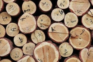 2017年波罗的海地区木材