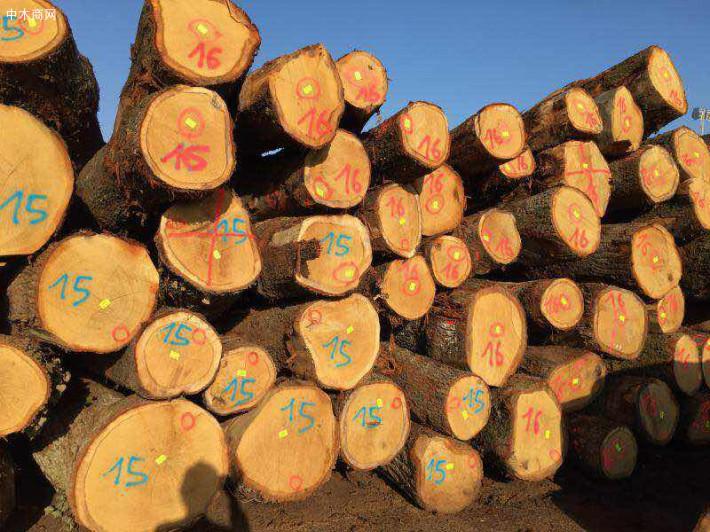 欧洲白橡木主要用途
