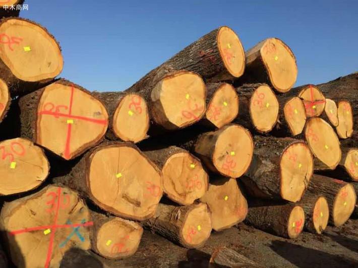 欧洲白橡木原木板材的优缺点