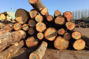 欧洲白橡木原木厂家批发报价