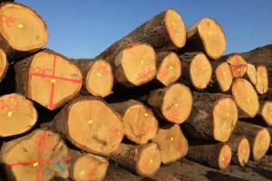 欧洲白橡木原木效果图片