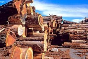 木材硬度大全,懂行的人都收藏了