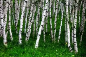 世界上最硬的树木:子弹打上去都没事!