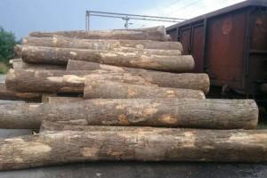 湘潭市森林公安局依法没收百余立方米无合法来源木材