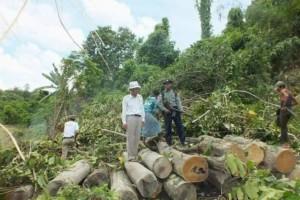 缅甸每年查获那么多走私木,都去哪了?
