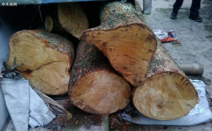金丝楠木原木是一些材质中有金丝和类似绸缎光泽现象的楠木