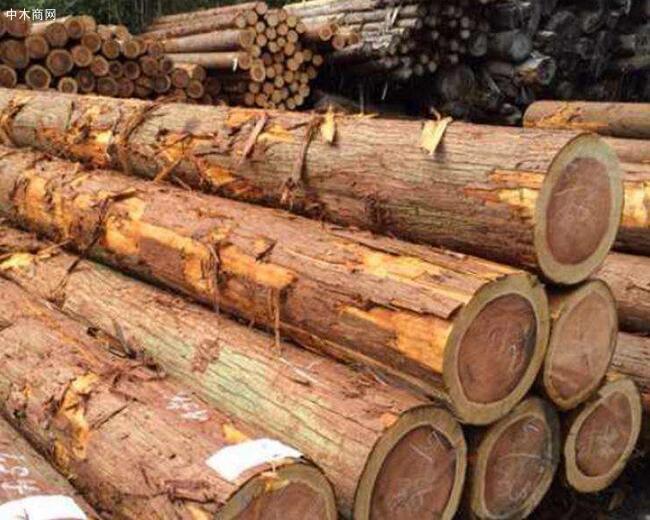 求购:柳杉原木