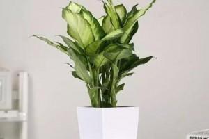 吸甲醛比较好的植物有哪些?谁能说一下?
