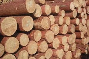 俄罗斯布市海关木材出口