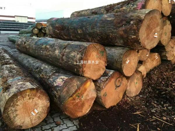 可定制 新西兰辐射松  花旗 樟子松 加勒比松等原木