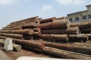 禁止出售木材?安哥拉农