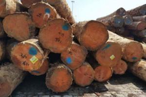 中林集团携手国际合作伙伴打造良好贸易关系