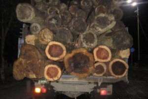 打击违法运输 贵阳加大木材流通领域夜间执法力度