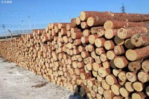 国家商务部调研组来绥芬河调研对俄林业与劳务合作