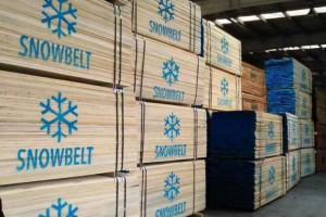 美国进口椴木板材最新报价