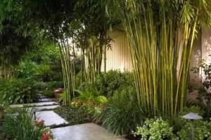 26种 · 竹类植物
