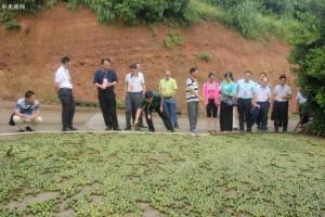 广西来宾市调研组到园区调研林产加工业