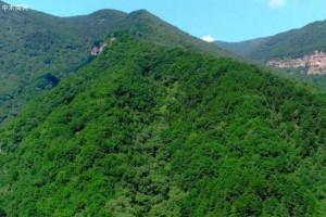蚌埠:全市林业总产值增至55亿元