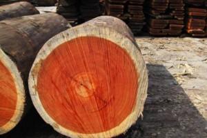 越南与欧盟签署合法木材协议
