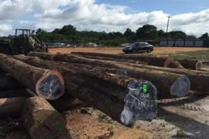 林产品信息提供商RISI公司收购木材价格报告机构