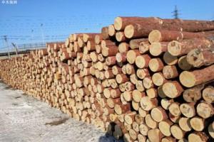 俄罗斯募集18万人签名要求暂停对中国出口木材