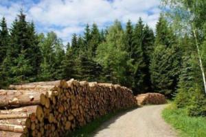 广西林业经济上半年增长7.3%