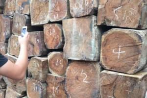 明年起,这些老挝木材将被禁止出口到越南
