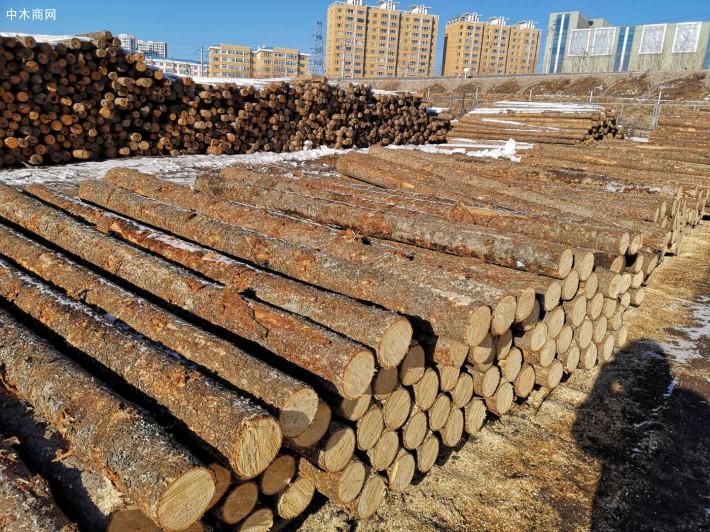 俄罗斯落叶松工程木方厂家批发价格视频