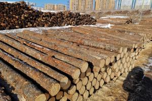 大量精品俄罗斯落叶松原木现货库存视频