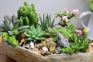 微型盆栽应该如何养护?