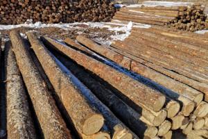 俄总理就对华木材出口问题作出回答