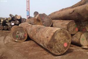 自2019年1月1日起赤道几内亚全面禁止原木出口
