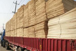 """贵港助力""""中国南方板材之都""""木材加工产业发展"""