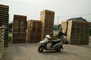 杨木托盘实物图片