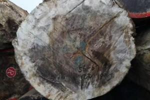 圭亚那政府支持外资进入木材加工行业