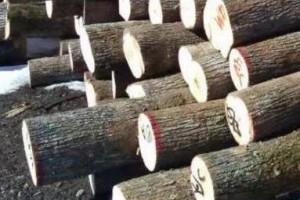 带你了解:椴木、柏木、榆木、杨木、檀木、红木、橡木