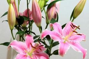 如何养花,才能将花养的越来越好?