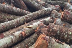 杂木供货量足,成品好,按照客户要求定制服务