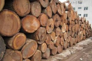 莫桑比克2019年继续对多种木材实施禁伐令
