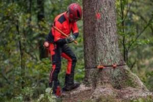 两男子伐树未设警戒将路人砸成一死一伤