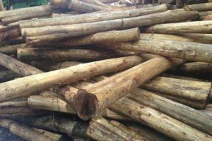 马来西亚原木短缺对木材行业的影响和动荡!